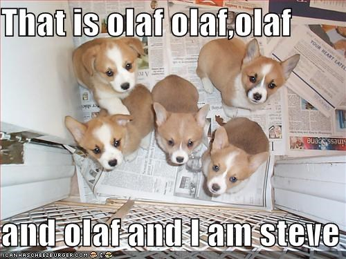 corgi,corgis,friends,group,names,olaf,puppy,steve