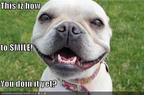 french bulldogs happy dog smile smiles smiling - 5110040832