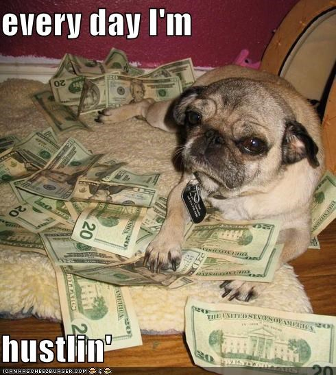 hustlin,lucky dog,money,pug,rich
