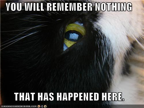 caption,captioned,cat,eye,eyes,happened,here,hypnosis,hypnotic,nothing,pattern,photoshop,remember,will,you