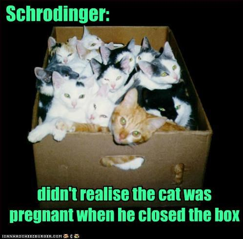 box caption captioned cat Cats didnt experiment kitten oops pregnant realize schrodinger - 5110799616