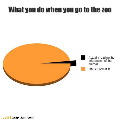 What you do when you go to the zoo
