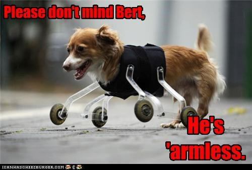 animals arms dogs harmless i has a hotdog legs prosthetics puns wheels - 5113006592
