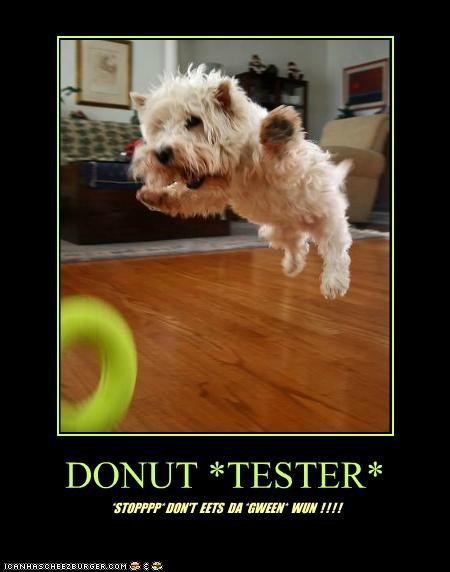 donut,donut tester,excited,jumping,playing,toys,west highland white terrier,westie