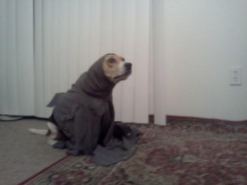 doggeh she got stuck Sundog - 5113104896