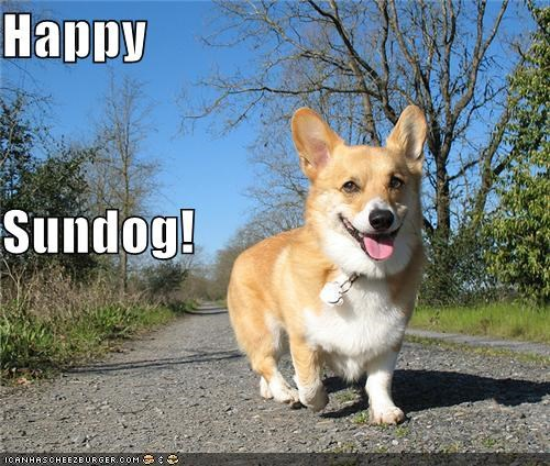 corgi going for a walk happy dog happy sundog outdoors smiling dog Sundog walk - 5113122816