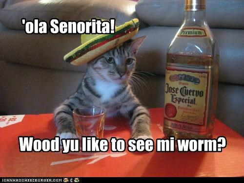 alcohol animals Cats drinking I Can Has Cheezburger Mexican pickup lines sombrero tequila - 5113452544