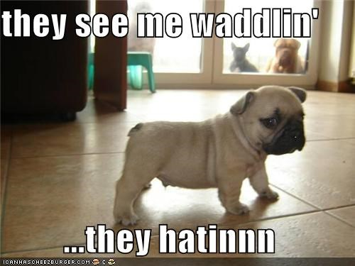 animals dogs hating i has a hotdog pugs puppies they see me rolling - 5113771264
