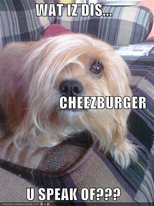 Cheezburger Image 5114109184