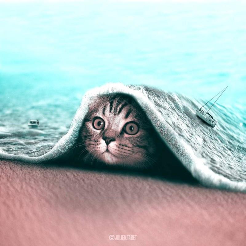 art composition surreal animals - 5114629
