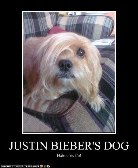 JUSTIN BIEBER'S DOG Hates his life!