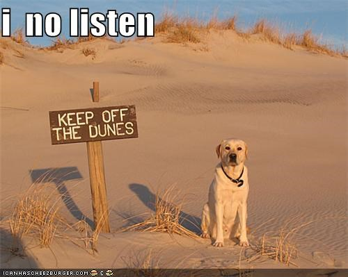 animals,dogs,dont-listen,dunes,i has a hotdog,ignore,rebel,signs