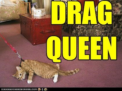 caption,captioned,cat,drag,drag queen,dragging,leash,literalism,pun,queen,tabby