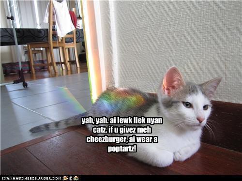 Cheezburger Image 5116228864