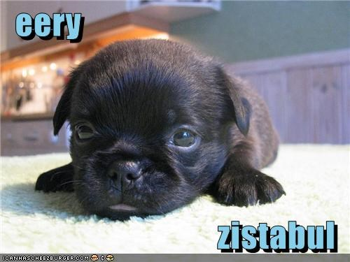 awww cute irresistible Precious puppy sweet whatbreed - 5116635392