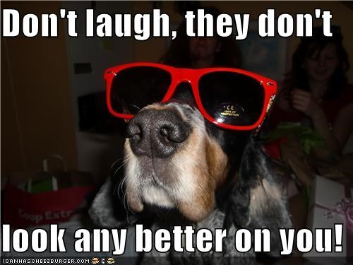 dont-laugh silly sunglasses whatbreed - 5116689408