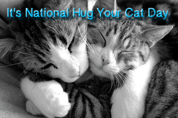 hugging snuggling cats
