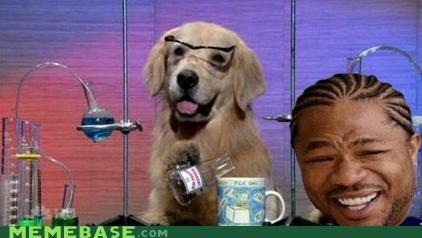 animemes dogs golden labs retreiver yo dawg - 5117934336