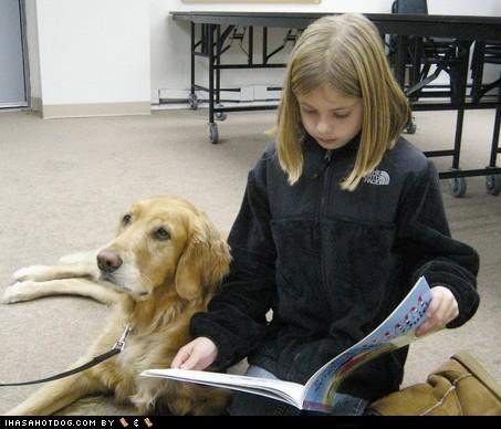 goggie ob teh week,golden retriever,read,reading,therapy dog,working dog