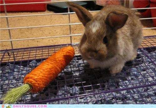 bunny,carrot,chew toy,do not want,imitation,impostor,rabbit,reader squees,real,unhappy