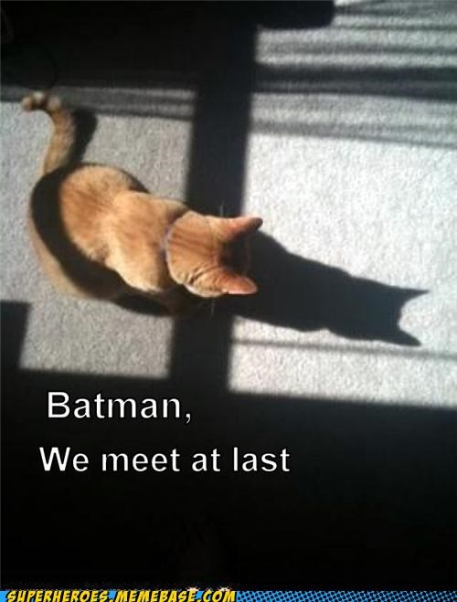 batman cat catwoman cute DC Super-Lols - 5118448384