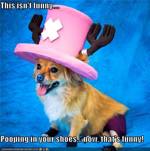 animals,costume,dogs,i has a hotdog,mad hatter,not funny,poop,shoes