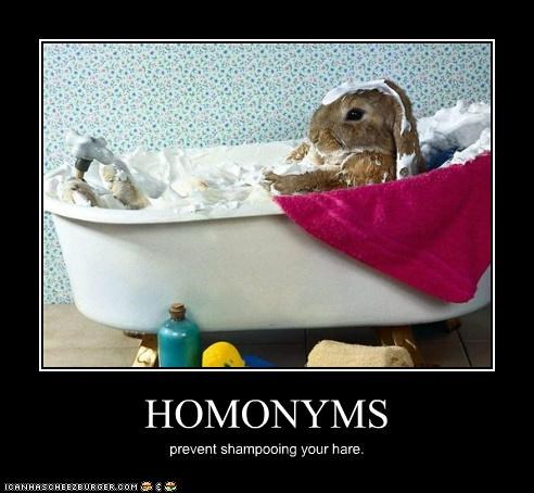 animals,bath,bathing,bunnies,hair,hare,homonyms,homophones,I Can Has Cheezburger,shampoo,word play