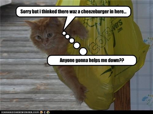 Sorry but i thinked there waz a cheezeburger in here!