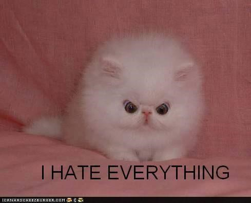 angry,classics,Fluffy,hate,i hate everything,mad,white