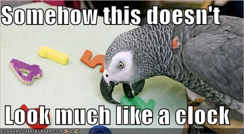 animals birds clocks dumb FAIL I Can Has Cheezburger parrots wat - 5118868736