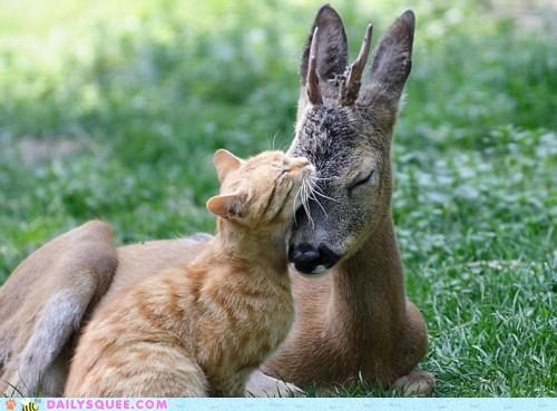 cat deer fawn fawning Hall of Fame Interspecies Love pun puns - 5118937856