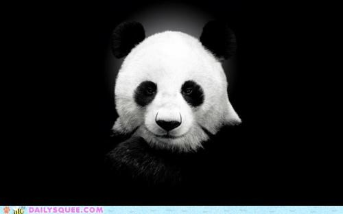 acting like animals,advice animal,Bad Pickup Line Panda,head,IRL,meme,panda,panda bear,shadow,silhouette