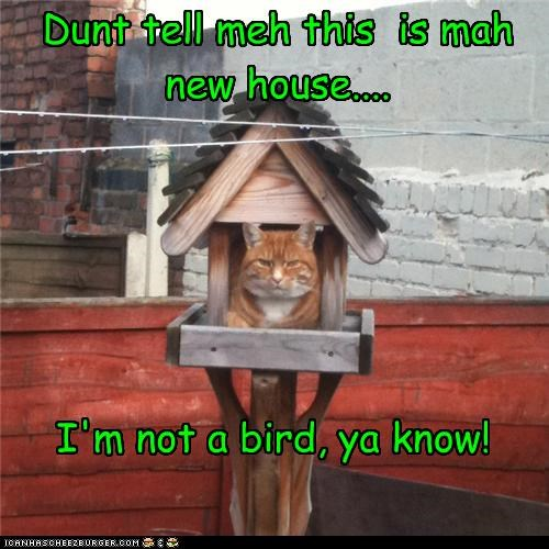 Dunt tell meh this is mah new house.... I'm not a bird, ya know!