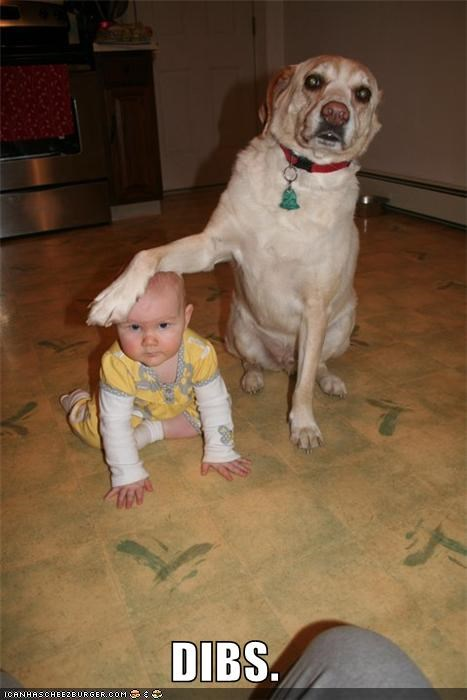 animals Babies dibs i has a hotdog kids mine paws - 5119448320