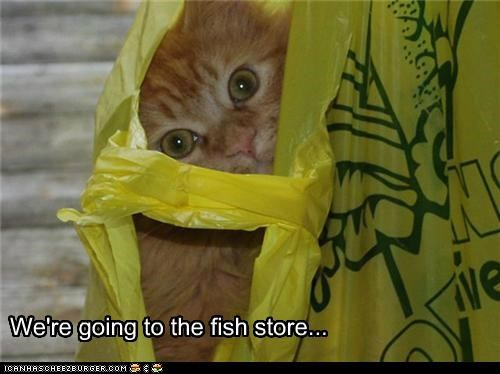 We're going to the fish store...