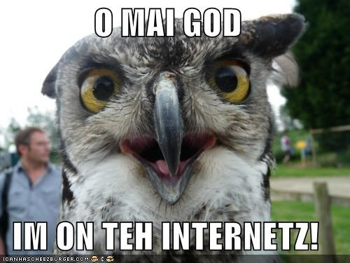 animals I Can Has Cheezburger internet internets oh my god omg owls - 5119647488