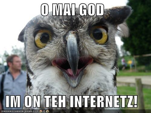 animals I Can Has Cheezburger internet oh my god omg owls - 5119647488