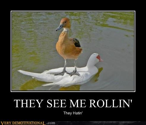 animals,cool,ducks,they see me rollin,water