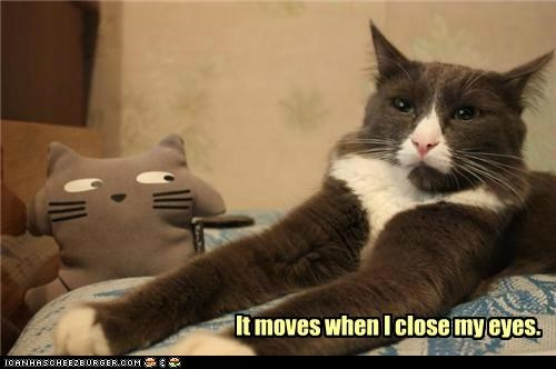 caption,captioned,cat,close,eyes,freaked out,moves,stuffed animal,when