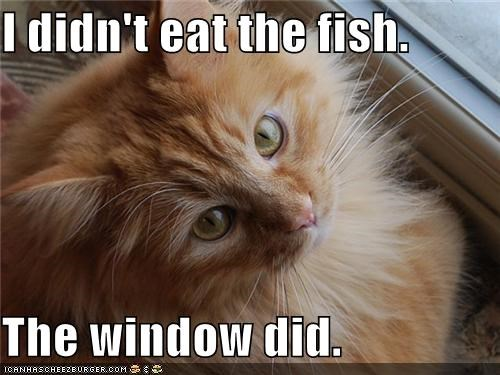 I didn't eat the fish.  The window did.