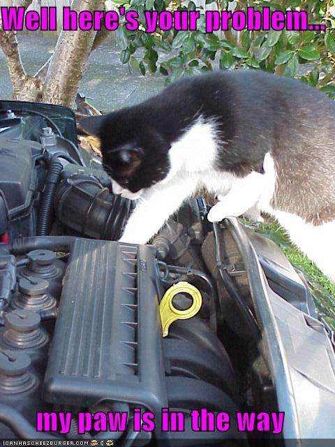 blocking,caption,captioned,car,cat,engine,here,in,inspecting,mechanic,motor,my,paw,problem,way,well
