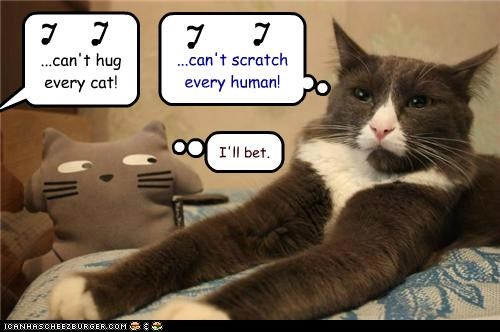 ...can't hug every cat! ...can't scratch every human! I'll bet. l l l l ~ ~ ~ ~ S S S S