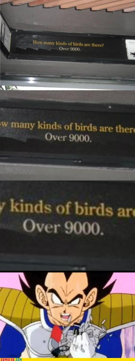 9000 birds dragonball z TV vegeta zoo - 5121190912