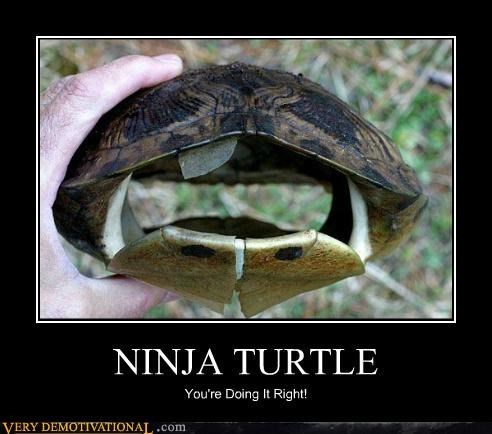 just-kidding-relax ninja ninja turtle turtle you are doing right