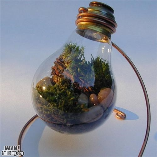 glass,light bulb,nature,recycle,repurposed,terrarium
