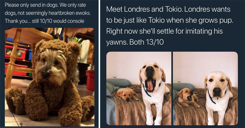 Twitter memes, funny tweets from we rate dogs, weratedogs, dog rating, doggos, borkers, doge.