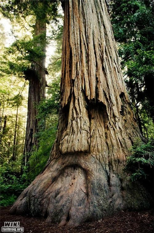 deku tree Forest nerdgasm tree zelda - 5122142464