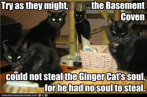basement,basement cat,caption,captioned,cat,Cats,coven,FAIL,ginger,Hall of Fame,no,soul,stealing