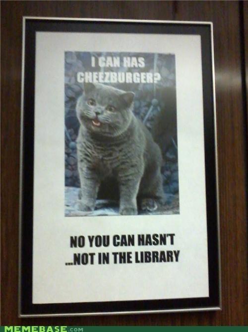 Cats cheezburger food IRL library Memes - 5122692096