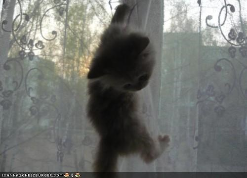 climbing curtains cyoot kitteh of teh day naughty uh oh - 5122744320